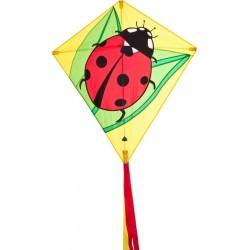 iv011  - Eddy Ladybug